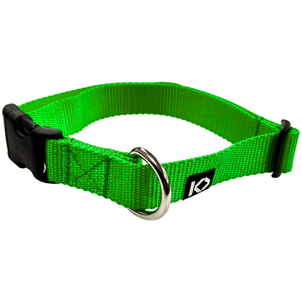 buckled-collar-neon-green